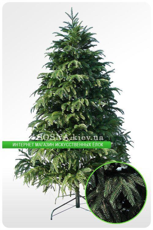 фото дерево смерека